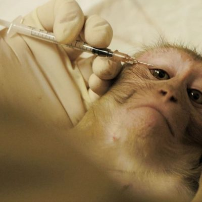 Chinese Scientists Successfully Implant Monkey Brain with Human Gene!