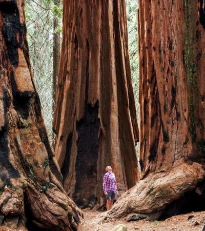 Ways To Protect Our National Parks